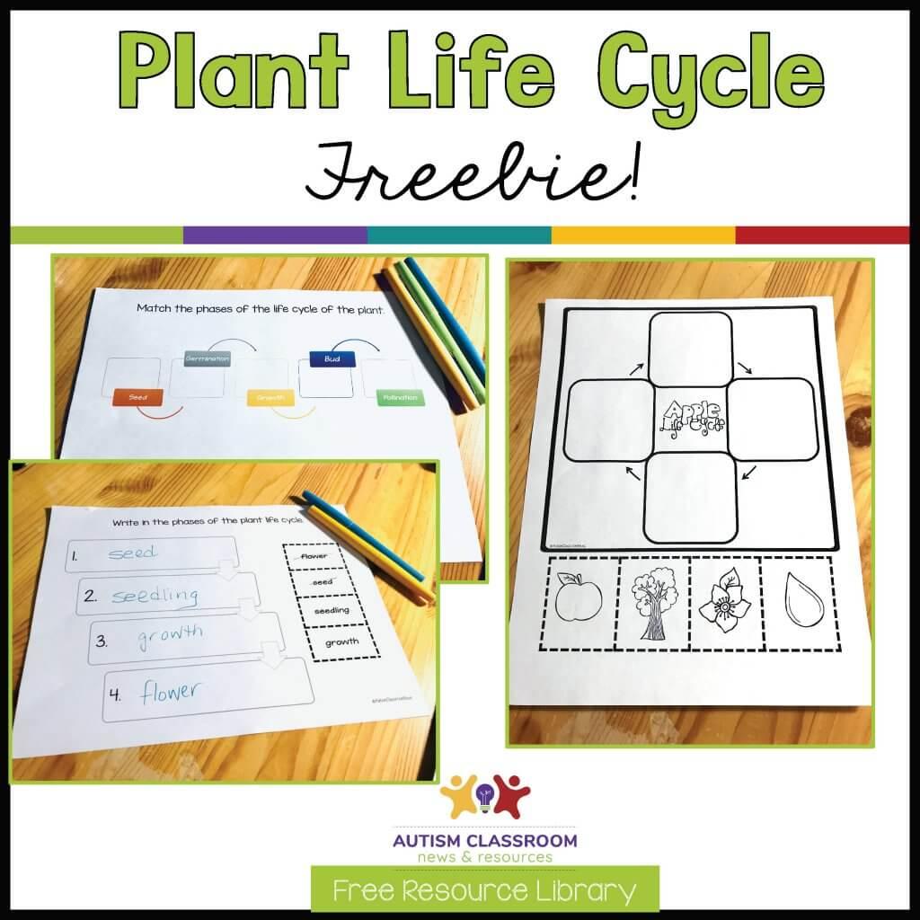 Plant Life Cycle Freebie